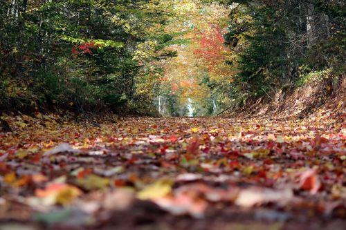 Leaf_shuffle_road