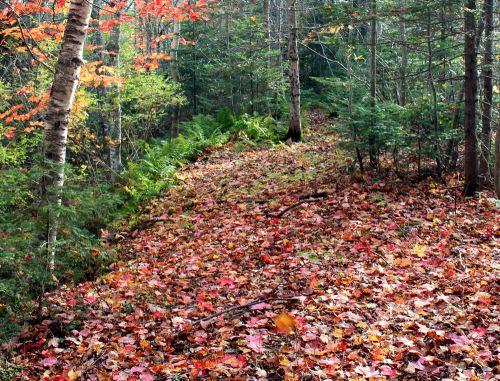 Mellish_pond_woods