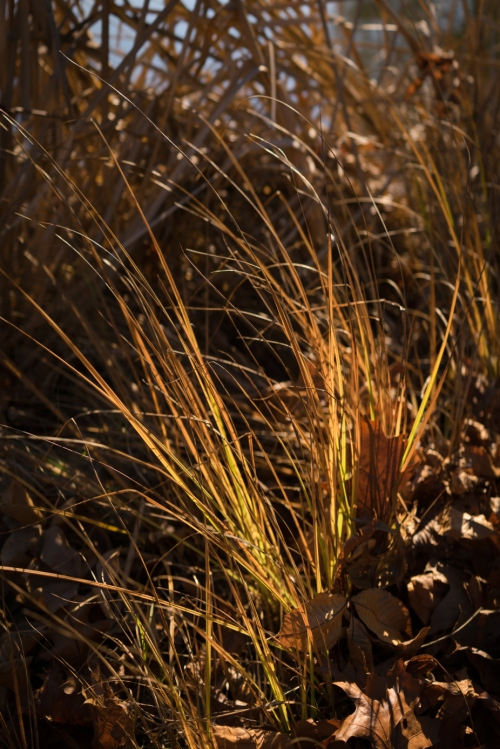Pond grasses in the noon sun -- Central Maryland (December 2015) Sony RX100 IV + Zeiss 1.8-2.8/24-70mm