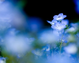 blue-flowers-wallpaper