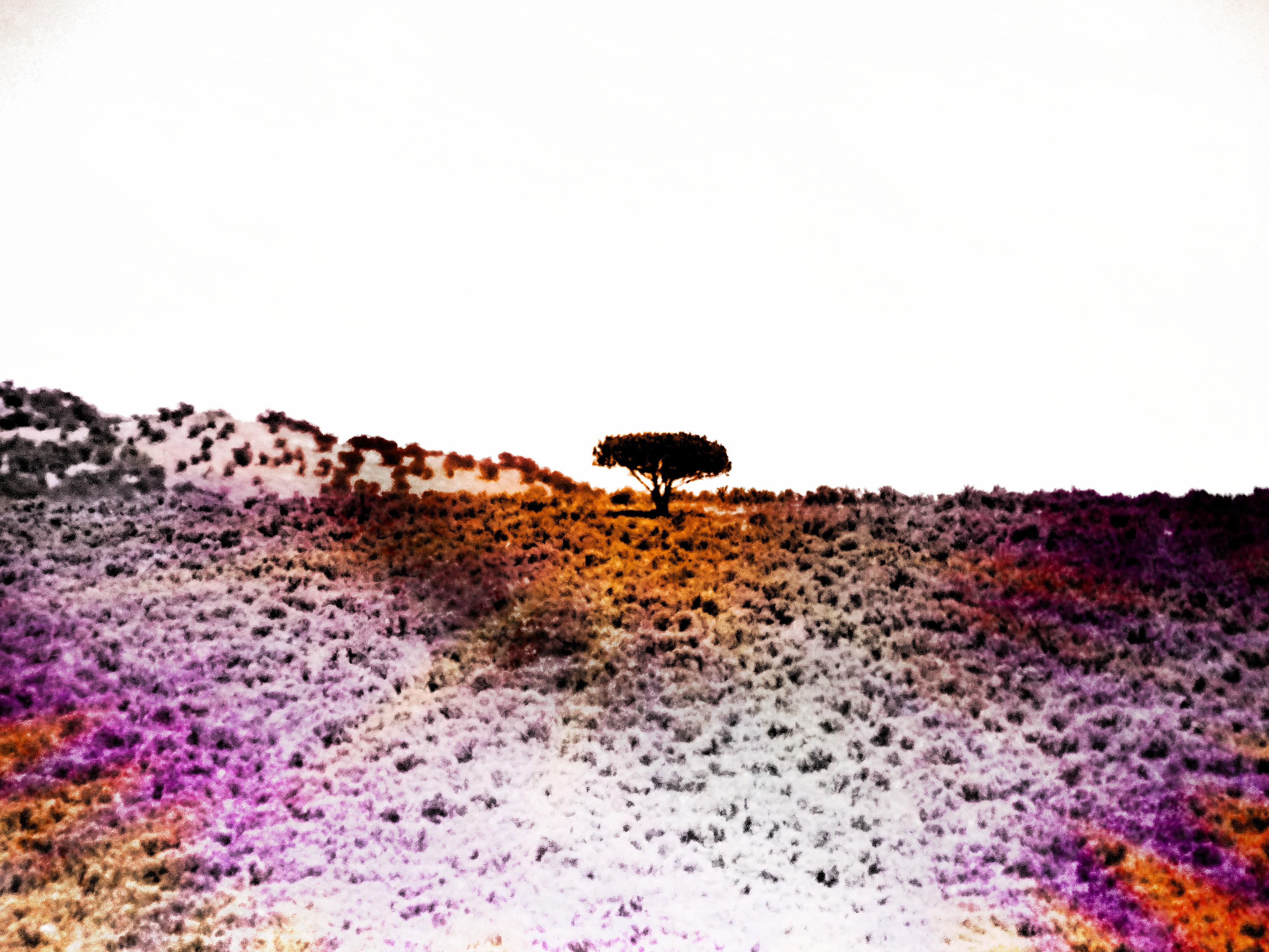 Reverse Solitudes