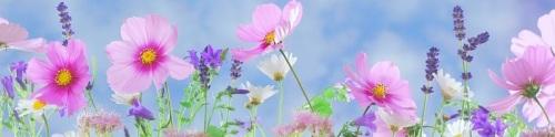 bloemen wild-flowers-571940__340 - kopie